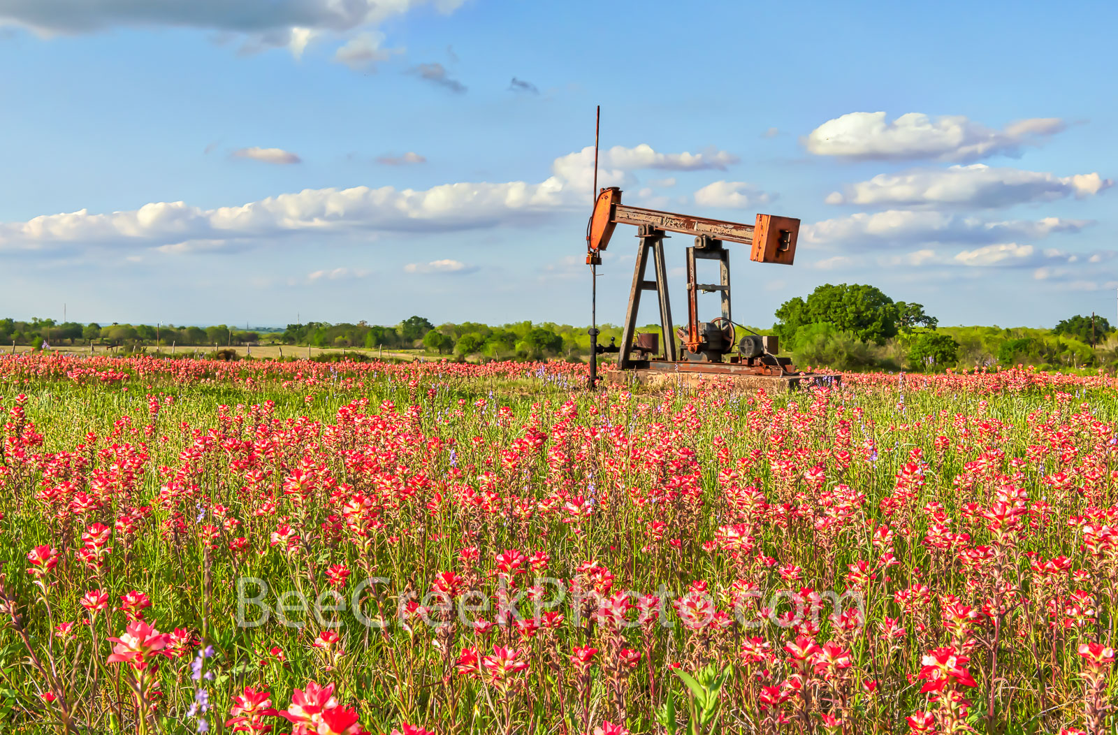 Texas Wildflowers with Oil Derrick - Oil well derrick with indian paintbrush and other wildflowers, who say they can't work together...