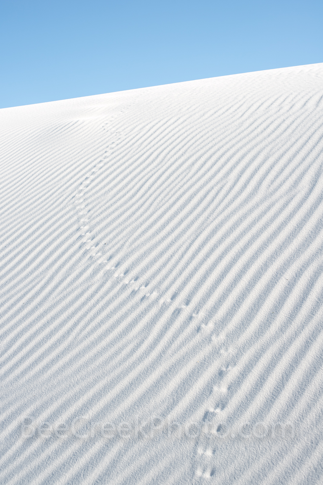 White sands, new mexico, nm, tracks, sand patterns, gypsum, dunes, patterns in the sand, vertical, dune, animal., photo