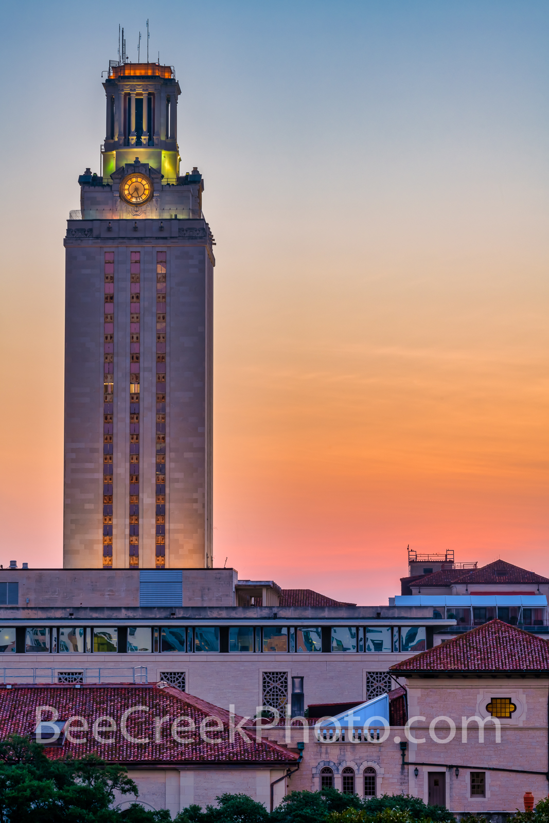 UT Tower Sunrise Vertical - We captured this U T Tower, Stadium and campus right at sunrise in a vertical format. The sky had...
