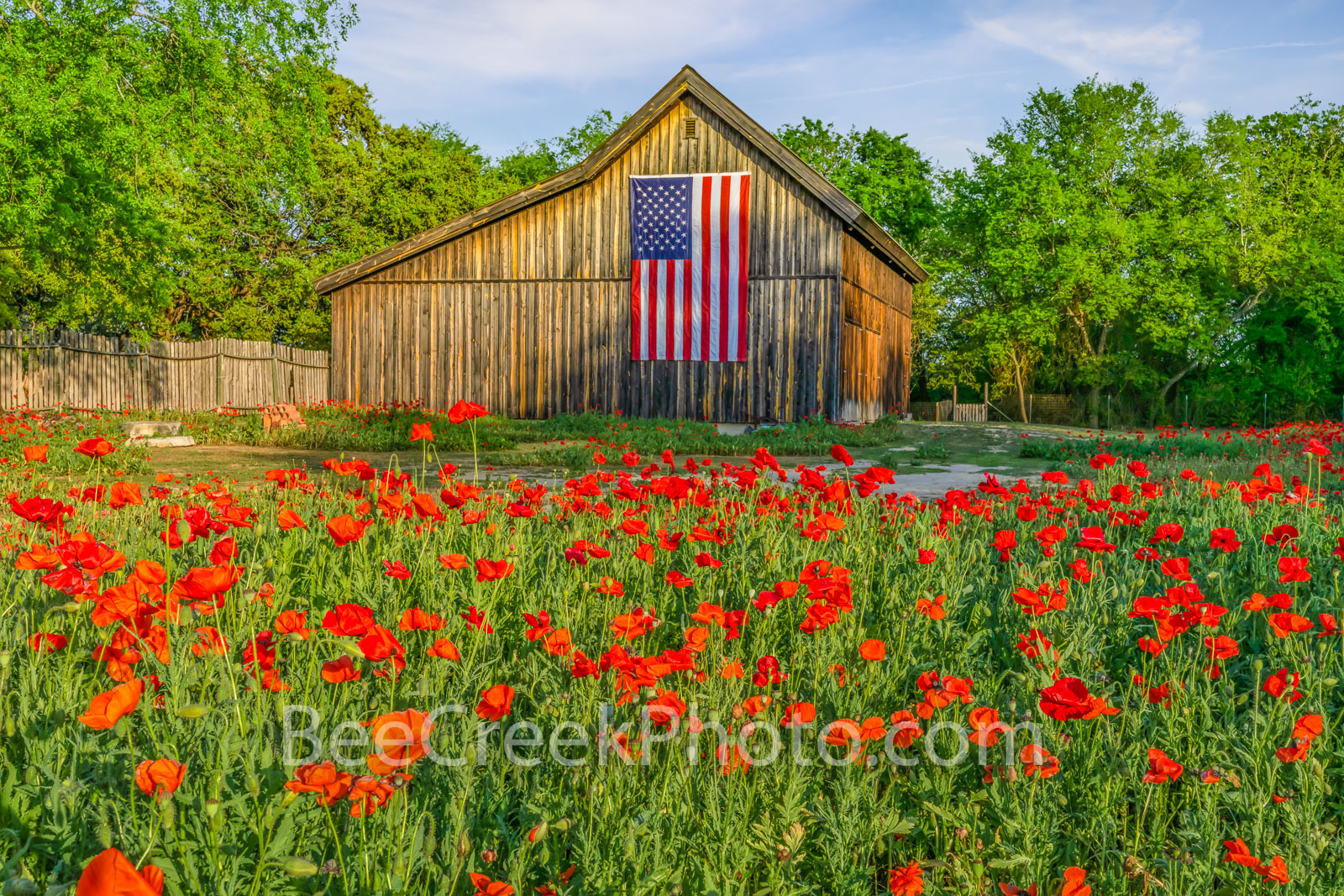 Vintage Barn Old Glory and Poppies - We were surprise with this old vintage barn with the American flag drapped on the side and...