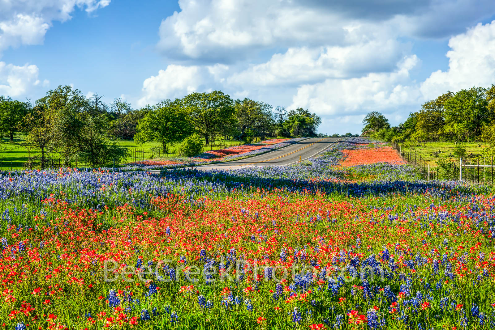 texas bluebonnets ,texas wildflowers, bluebonnets, indian paintbrush, blue, reds, landscape, texas landscapes, wildflowers, roadside, Texas Hill Country, Texas flowers, Texas wildflower, photos of w