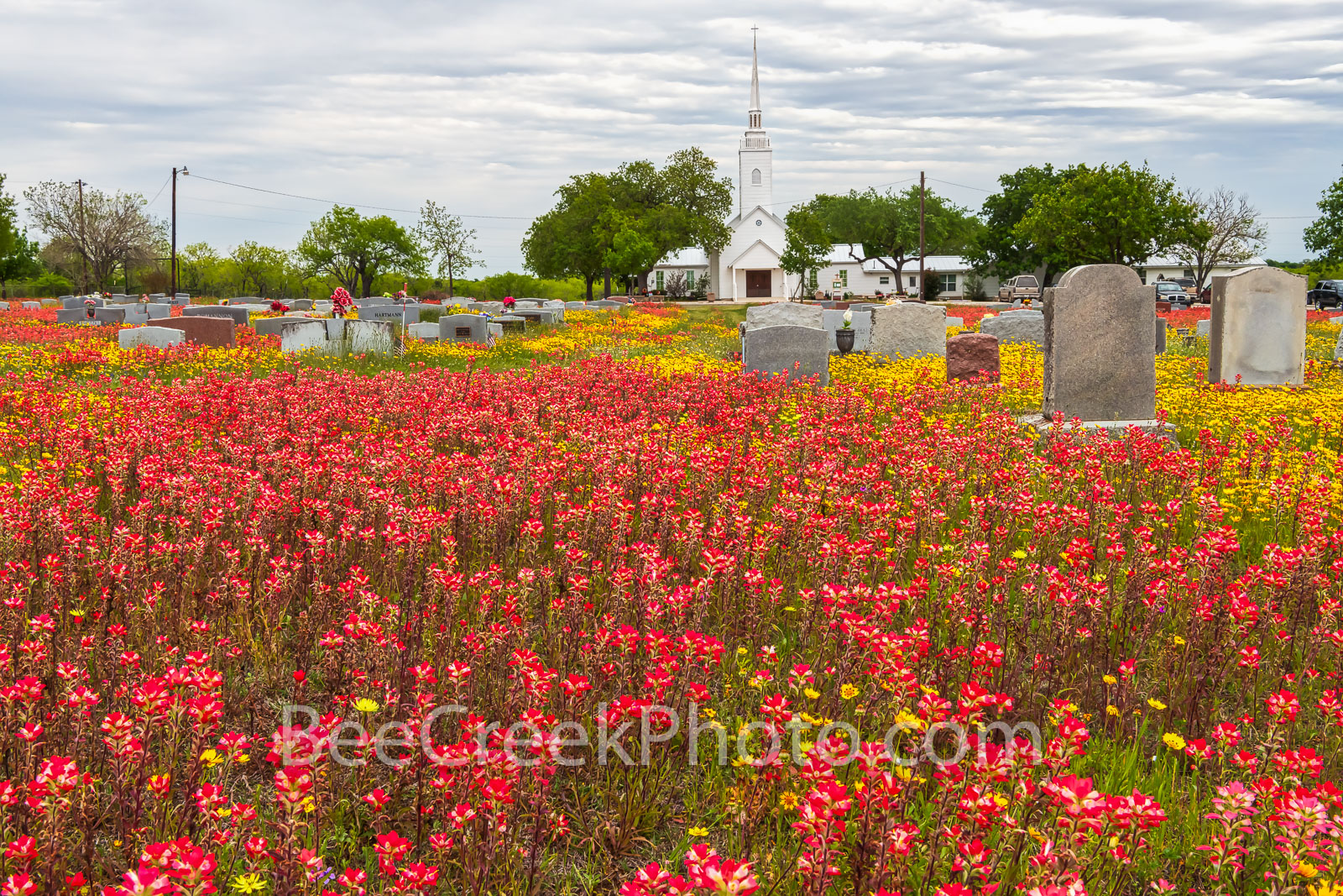 wildflowers, texas wildflowers, bluebonnets, indian paintbrush, yellow coreopsis, church, tombstones, texas, central texas, south texas, floral, flowers, plants, colorful wildflowers, backroads, vibra, photo