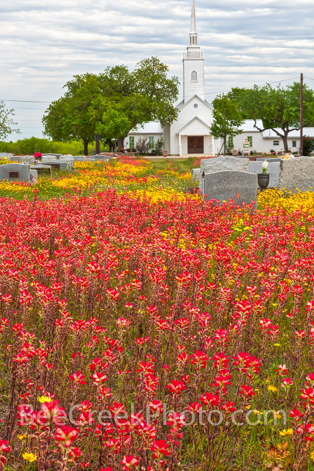 wildflowers, texas wildflowers, bluebonnets, indian paintbrush, yellow coreopsis, texas, central texas, south texas, floral, flowers, plants, colorful wildflowers, backroads, vibrant, colors, reds, ye, photo