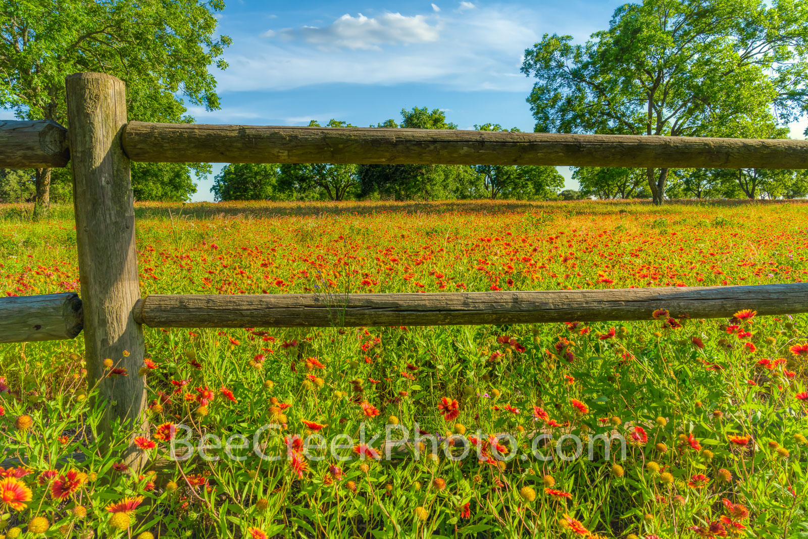 Wildflowers at the Fence - A field of Texas wildflowers along a fence in the hill country. The Texas hill country has some of...