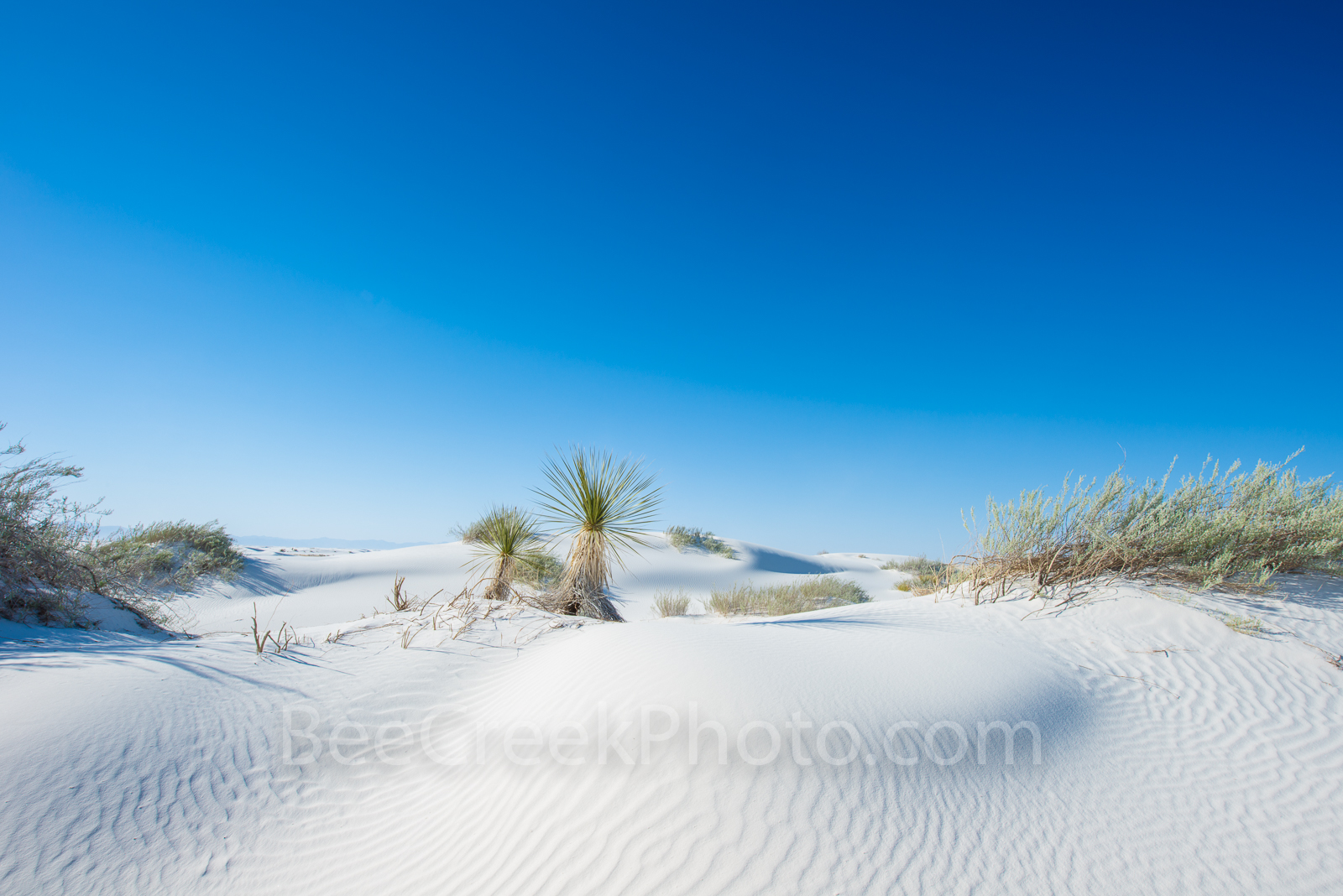 Alamagorda nm, New Mexico, New Mexico Parks, White Sand National Monument, Yucca in White sands, landscape, New Mexico landscape, white sands, dunes, flow of sand, gypsum, images of White Sands, magni, photo